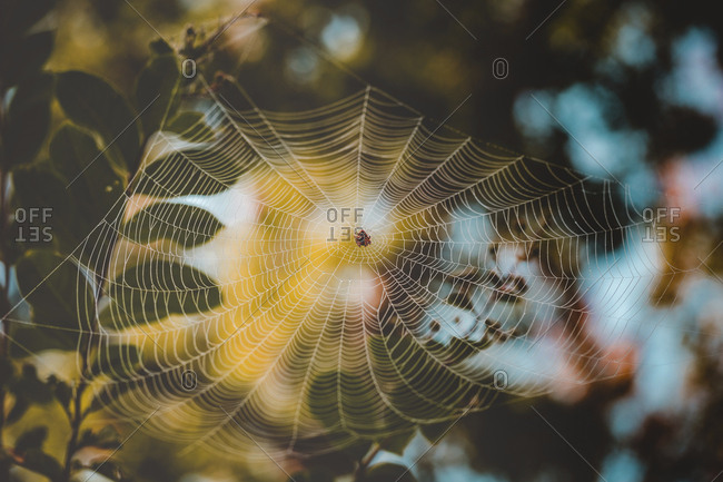 Low angle view of spider on web