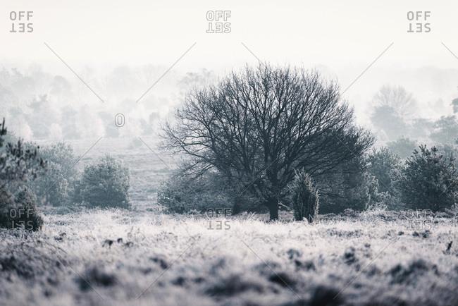 Bare tree in misty winter moorland.