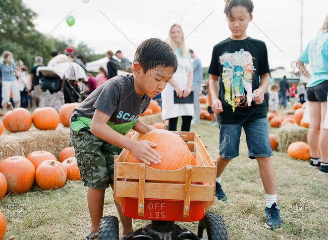 Brothers selecting pumpkins at farm