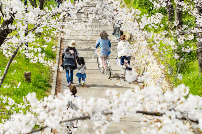People walking under the cherry blossoms.