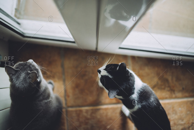 Two cats sitting in front of the door looking out