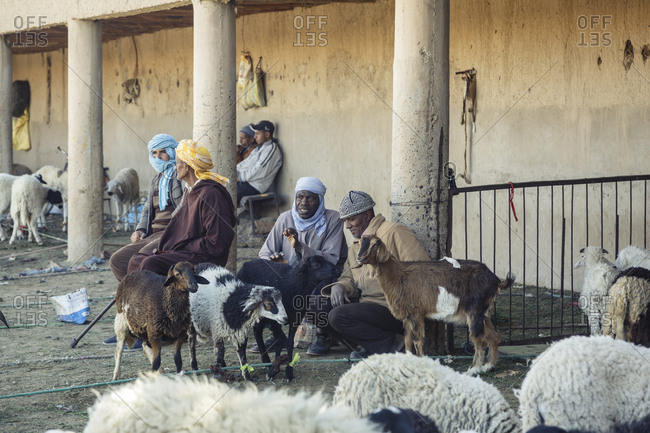 Rissani, Morocco - November 24, 2016: Sheeps and goats at the market, by the Sahara Desert