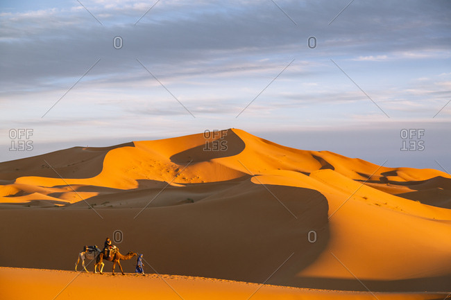 Tuareg man with camels and tourists at the Erg Chebbi sand dunes, Sahara Desert, Merzouga, Morocco.