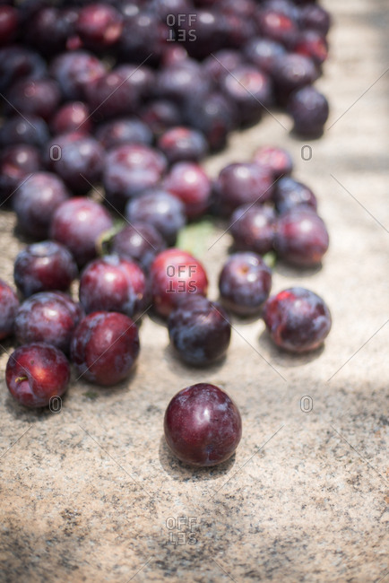 Close up of a pile of fresh picked plums