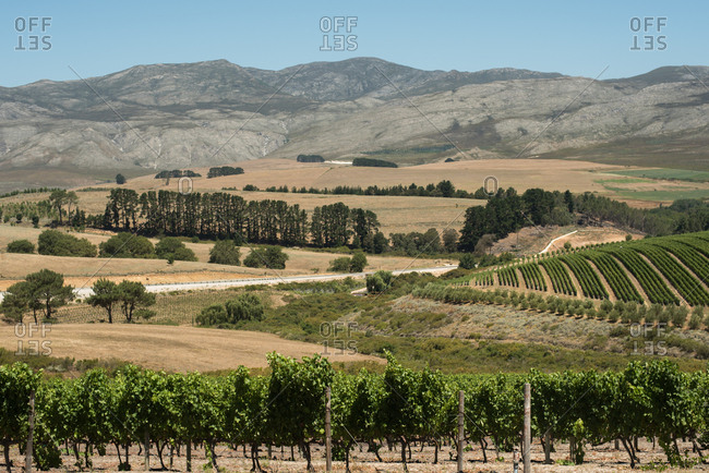 Scenic view of Hermanus Winelands in Western Cape, South Africa
