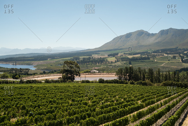 Scenic view of wine lands in Hermanus in Western Cape, South Africa