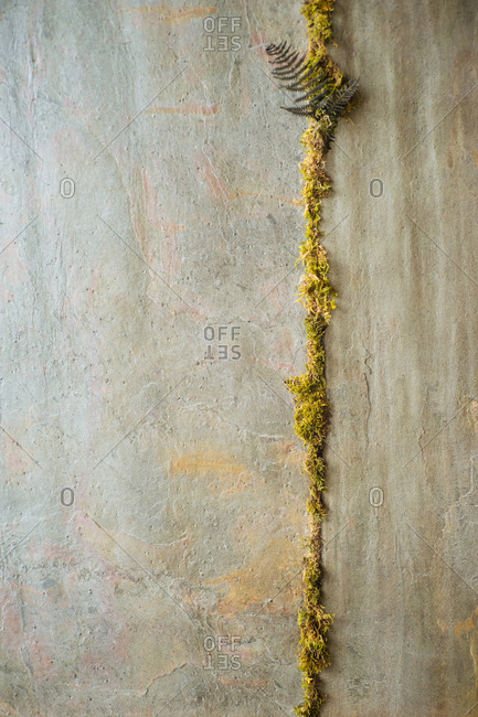 Moss growing in crack on a stone wall