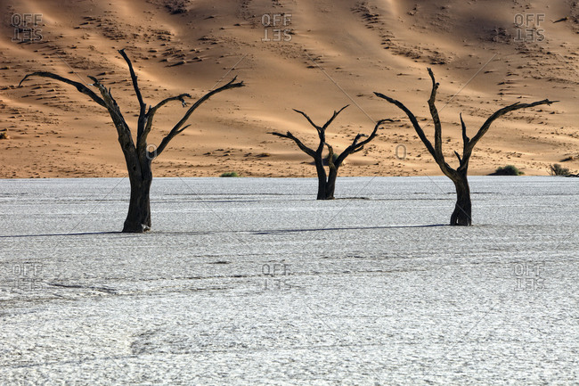 Namibia- Namib-Naukluft Park- dead trees in Dead Vlei