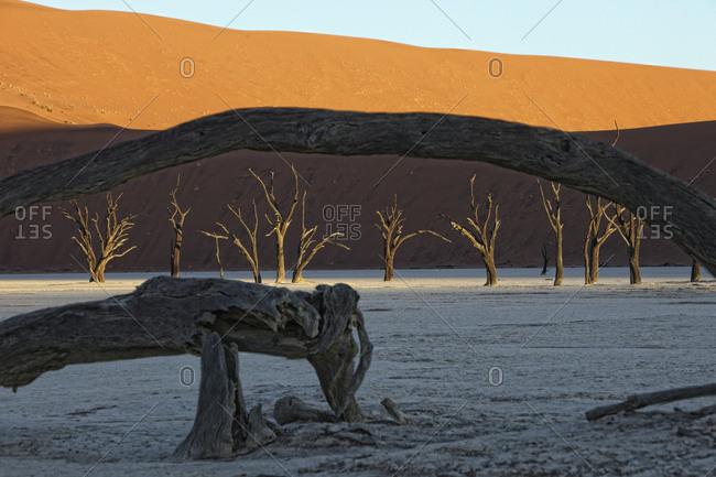 Namibia- Namib-Naukluft Park- Dead Vlei- dead trees in front of desert dune