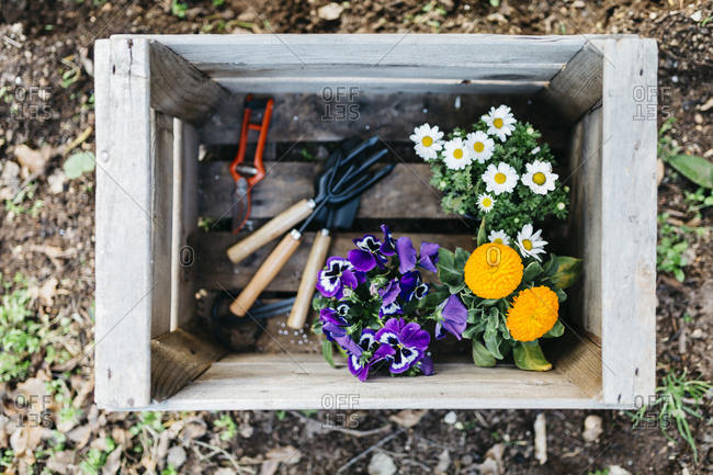 Flowers and gardening tools in a crate in garden
