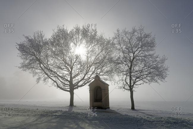 Germany- Bavaria- Pfaffenwinkel- frost at pilgrims' path to Andechs