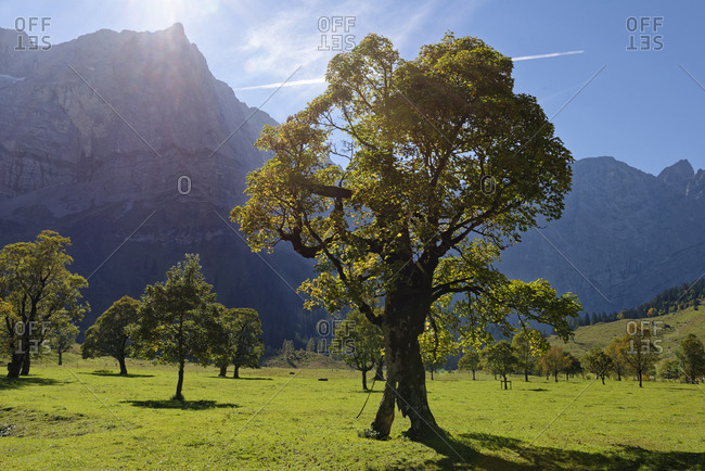 Austria- Tyrol- trees in front of Karwendel Mountains in autumn