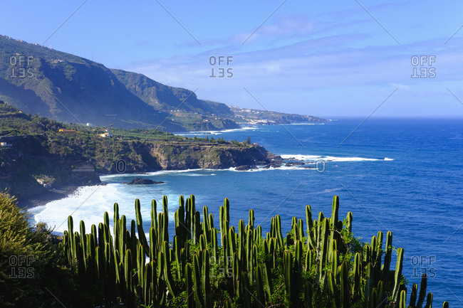 Spain- Canary Islands- Tenerife- Los Realejos- Punta del Guindaste- Canary Island Spurge