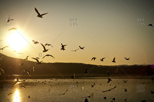 Flock of seabirds in coastal sunlight