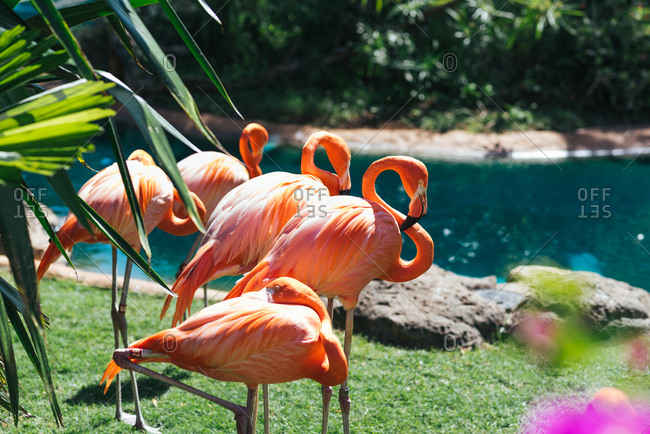 Flamingos in a lush setting