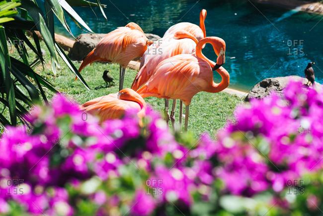 Flamingo birds in lush setting