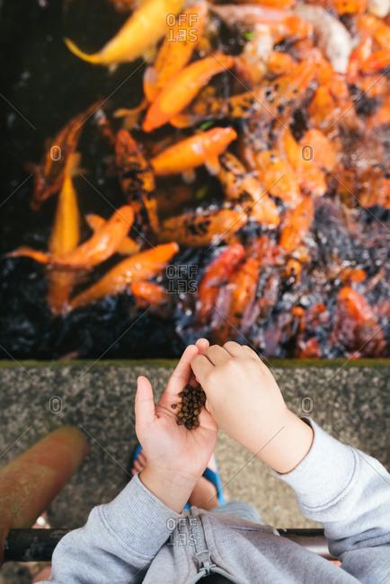 Boy feeding fish in koi bond