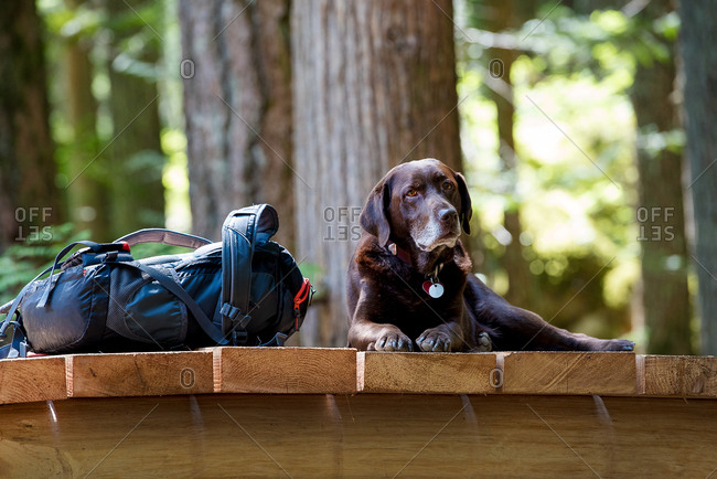 Dog on footbridge by backpack