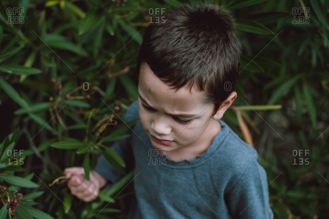 Young boy wandering through tall plants