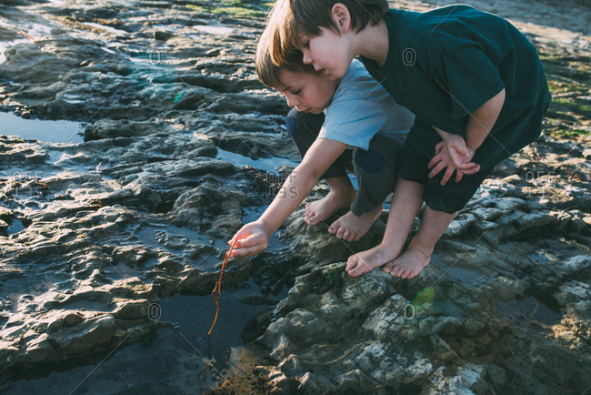 Two brothers exploring tidal pools among rocks