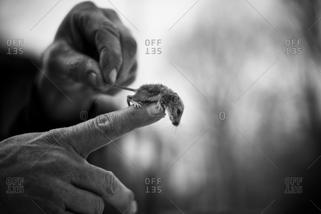 Tiny mouse on a man's finger in black and white