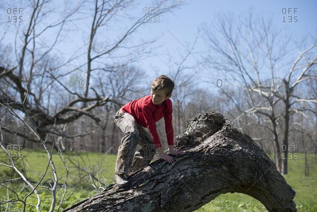 Boy climbing on a fallen tree