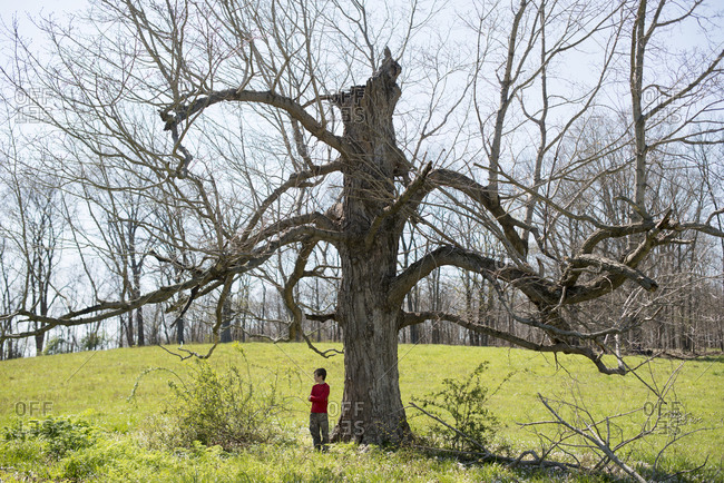 Boy standing beneath a large bare tree