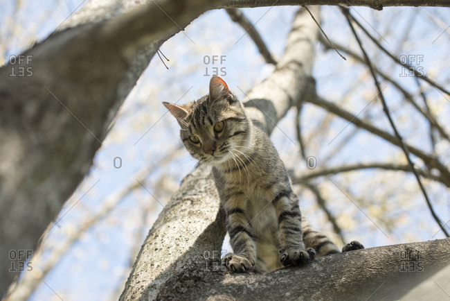 Cat sitting in a tree