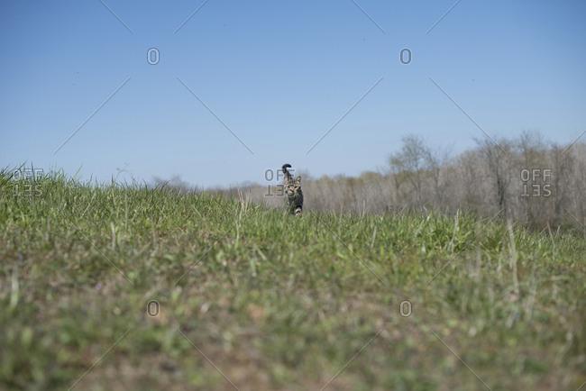 Cat walking in a field