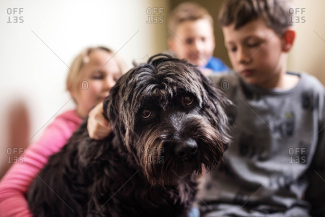 Group of kids with their shaggy dog