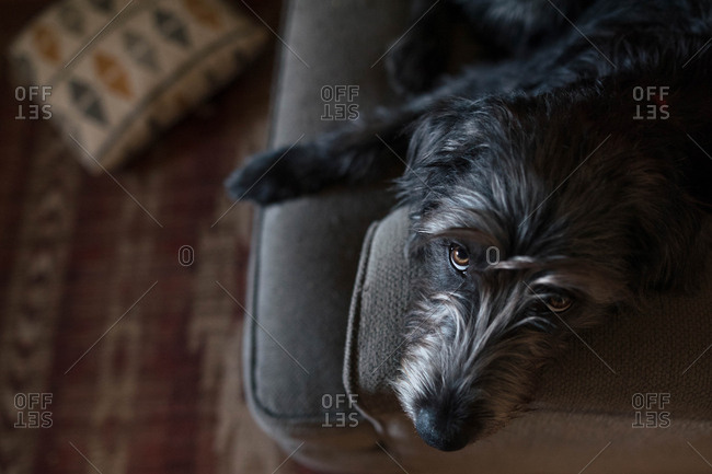 Overhead view of dog lying on couch