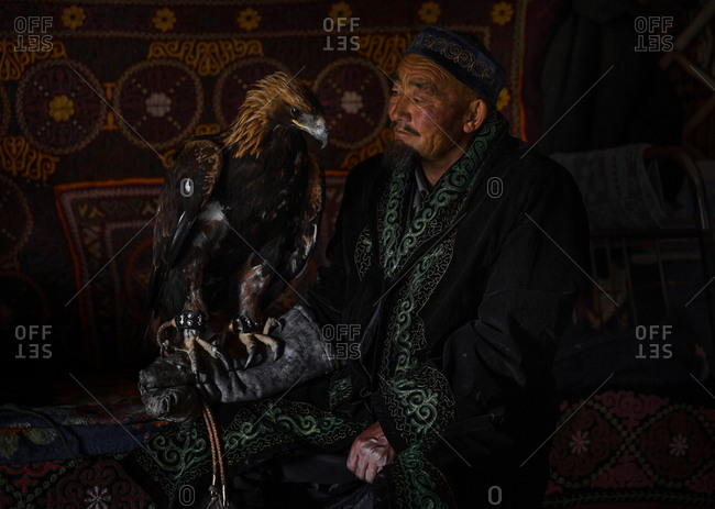 Altai Mountains, Mongolia - July 16, 2016: Senior Kazakh hunter with a golden eagle perched on his arm