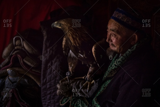 Altai Mountains, Mongolia - July 16, 2016: Senior Kazakh hunter sitting in a ger holding a golden eagle