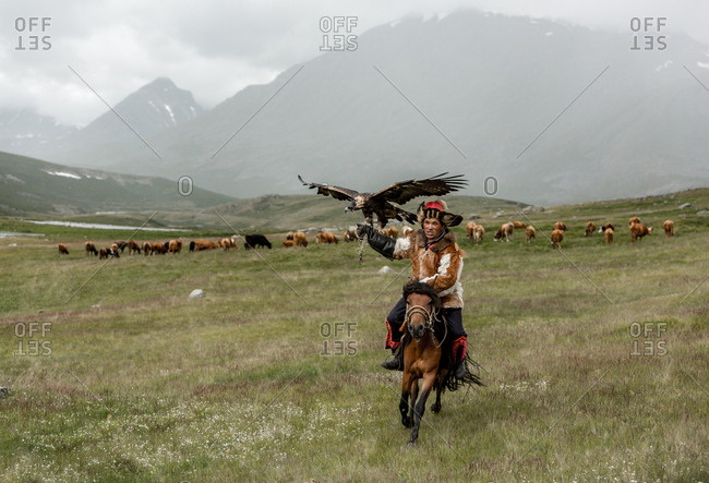 Altai Mountains, Mongolia - July 20, 2016: Kazakh hunter riding a horse across a plain with a golden eagle perched on his arm