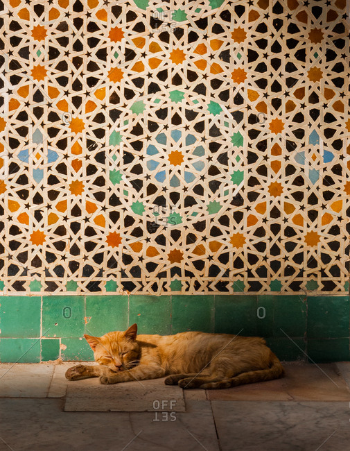 Orange cat sleeping next to a mosaic wall in Fez, Morocco