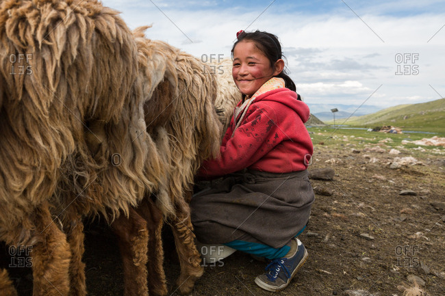 Altai Mountains, Mongolia - July 16, 2016: Kazakh girl milking sheep and goats