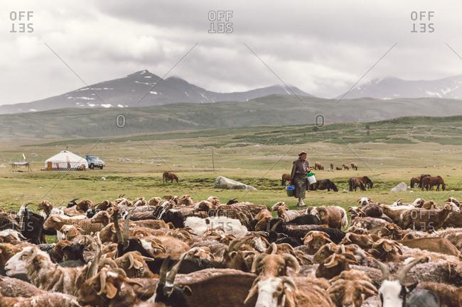 Altai Mountains, Mongolia - July 17, 2016: Kazakh woman walks toward livestock