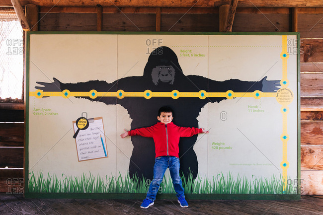 Little boy standing in front of large picture of a gorilla