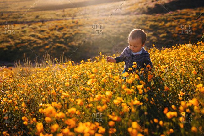 Baby boy walking through a field of wildflowers