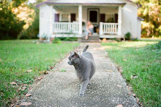 Grey cat walking on a path