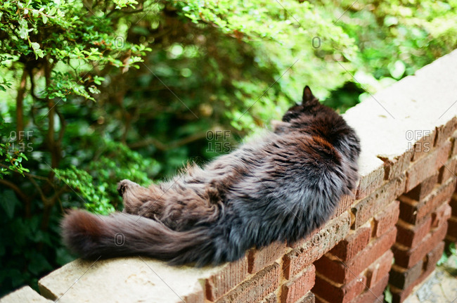 Sleeping cat on a brick porch wall