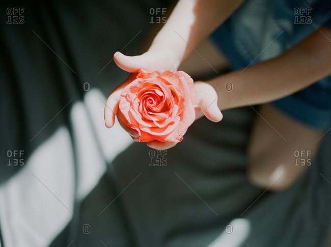 Small child holding a pink rose in outstretched arms