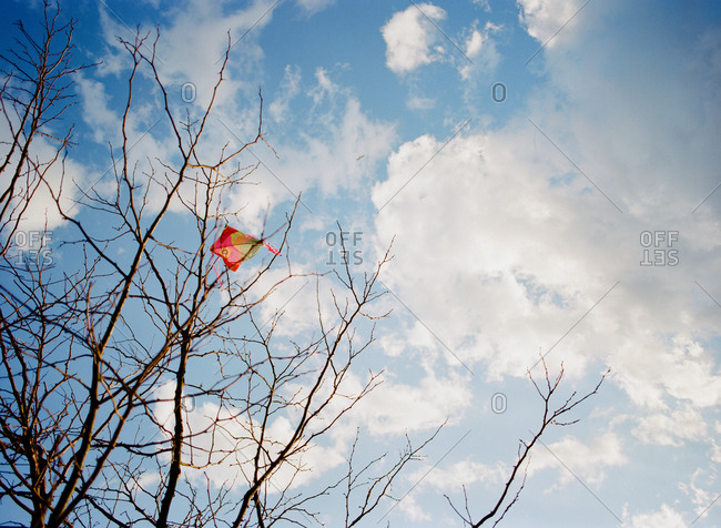 A kite stuck in the top of a leafless tree
