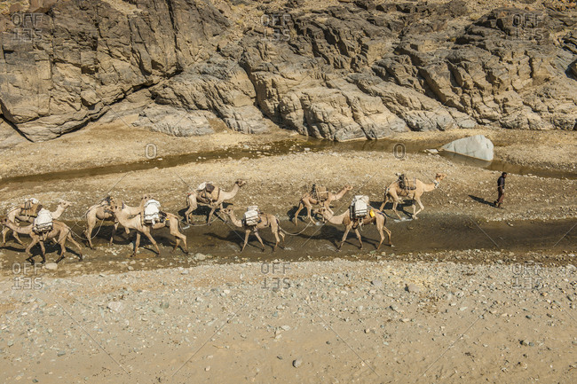 Tigray, Ethiopia - December 5, 2010: The canyon carved by the river Saba  is still path from caravans of camels carrying salt from Hamed Ela