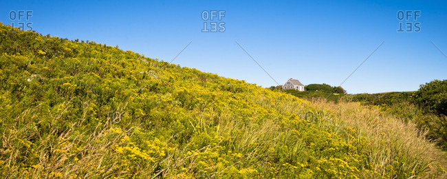 A Field Of Goldenrod In Late Summer On Block Island