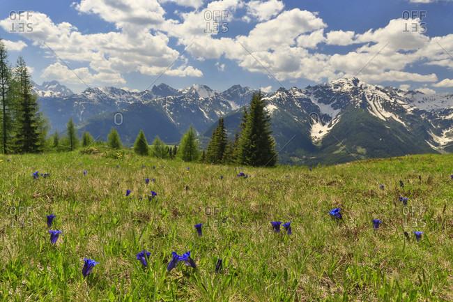 An Alpine Field And Wildflowers In Julian Alps, Slovenia