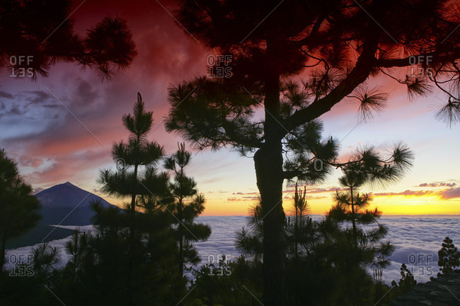 Majestic View Of Cloudscape Beyond A Tree With Silhouetted Mountain In Teide National Park, Spain