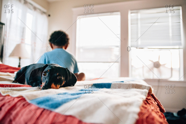 Dog lays on bed with boy in background