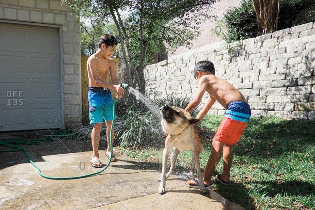 Two boys washing dog with hose