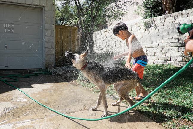 Boys washing dog with hose